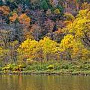 The Season Of Yellow Leaves Art Print