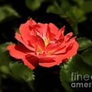 The Secret Rose Art Print
