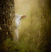 The Shy Lamb Art Print