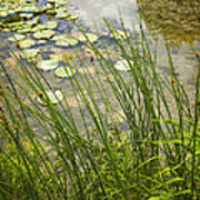 The Side Of The Lily Pond Art Print