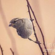 The Sideways Sparrow Art Print