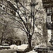 The Snow Tree - Sepia Antique Look Art Print