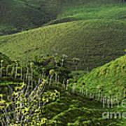 The Soft Hills Of Caizan Art Print
