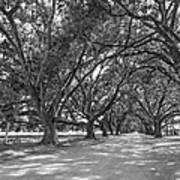 The Southern Way Bw Art Print