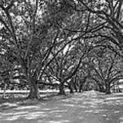 The Southern Way Bw Art Print