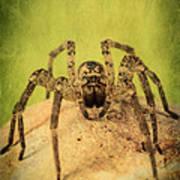 The Spider Series X Art Print