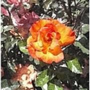 The Spring Rose Art Print