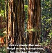 The Strength Of Two - From Ecclesiastes 4.9 And 4.12 - Muir Woods National Monument Art Print