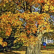 The Swinging Tree Art Print