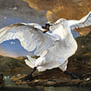 The Threatened Swan Art Print