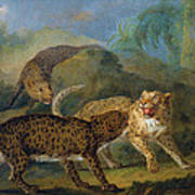 The Three Leopards Art Print