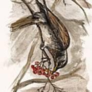 The Thrush Eating Cranberries Art Print