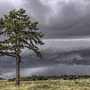 The Thunder Rolls - Storm - Pine Tree Art Print by Jason Politte