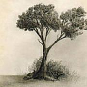 The Tree Quietly Stood Alone Art Print