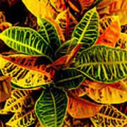 The Tropical Croton Art Print by Lisa Cortez