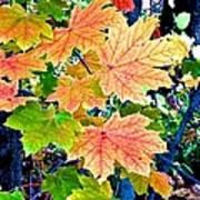 The Turning Leaves Art Print