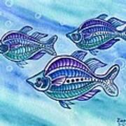 The Turquoise Rainbow Fish Art Print