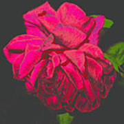 The Ultimate Red Rose Art Print