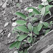 The Untouchable Plant Art Print