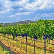 The Vineyard In Color Print by Kristina Deane