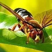 The Wasp Art Print