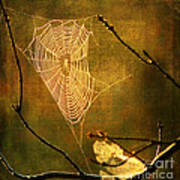 The Web We Weave Art Print by Darren Fisher