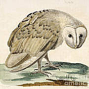 The White Owl Art Print