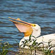 The White Pelican Art Print