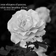 The White Rose Breathes Of Love Art Print