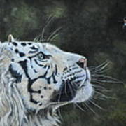 The White Tiger And The Butterfly Art Print