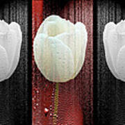 The White Tulip Art Print