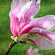 The Windblown Pink Magnolia - Flora - Tree - Spring - Garden Art Print