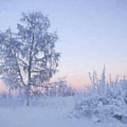 The Winter Light Art Print