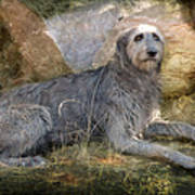 The Wolfhound  Art Print by Fran J Scott