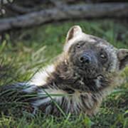 The Wolverine Skunk Bear Happy Face Art Print