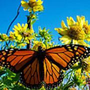 The Wonderful Monarch 3 Art Print