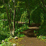The Wooded Path... Art Print