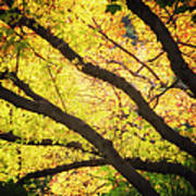 Then Autumn Arrives 03 Art Print