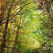 Thick Forest Hdr Art Print