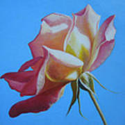 Things Are Coming Up Rosy Art Print