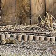 Thirteen-lined Ground Squirrel Art Print