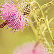 Thistle And Friend Art Print