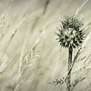 Thistle - Dreamers Garden Series Art Print