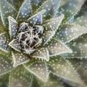 Thorny Succulent Art Print