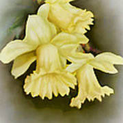 Those Blooming Daffadils Art Print