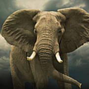 Threatening African Elephant Under Art Print