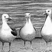 Three Amigos Art Print