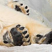 Three Bear Paws Art Print