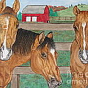 Three Beautiful Horses Art Print