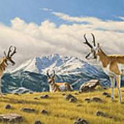 Three Bucks On The Ridge Art Print